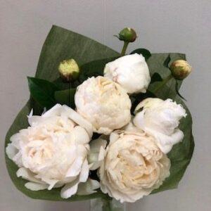 Peony Flowers - White - 5 Stem